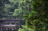 平泉寺白山神社、雨景