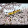 桜コースター