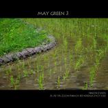 MAY GREEN 3