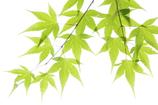 緑の季節、3