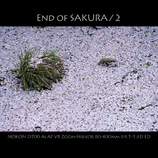 End of SAKURA / 2