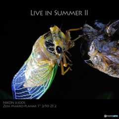 LIVE IN SUMMER II