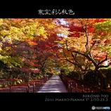 寒空彩る秋色