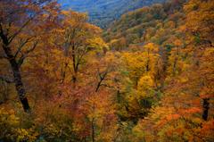 記憶の秋色