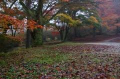 近所の秋 #8