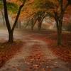 近所の秋 #5