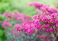 CONTAX RXで撮影した(春色)の写真(画像)