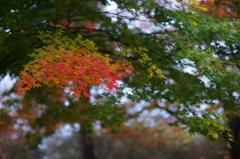 近所の秋 #10