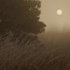 霧と霜の世界 #01