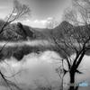 水中木の光景(2)