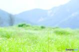 くじゅう 夏の坊ガツル(1)