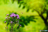 平尾台 秋の草花(1)