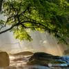 夏の菊池渓谷 #4