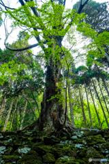 新緑の森 #11