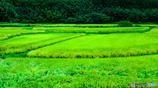 田染荘の田園