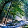 夏の菊池渓谷 #7