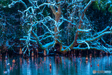 雪を纏う冬枯れ木