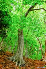 新緑の森 #8