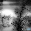 水中木の光景(3)