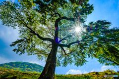 新緑と太陽と青空と