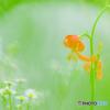 野の花(10)
