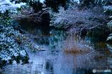 近所の池にて #6