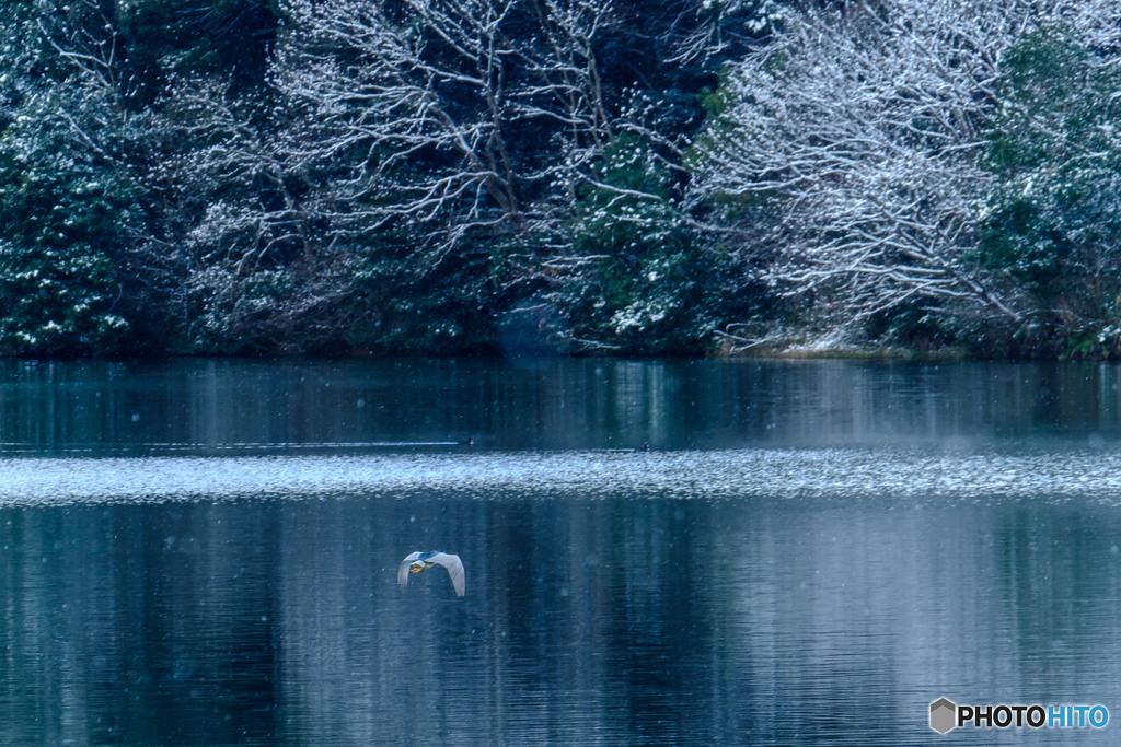 近所の池にて #4