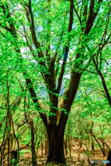 新緑の森 #10