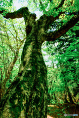 新緑の森 #9