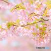 春色満開 #2