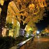 晩秋の日本大通り