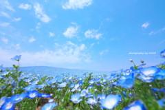 sky-blue。