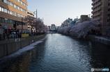 大岡川桜探訪 #16