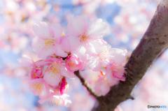 春の足音 #4