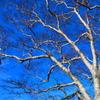 青空と白き枝