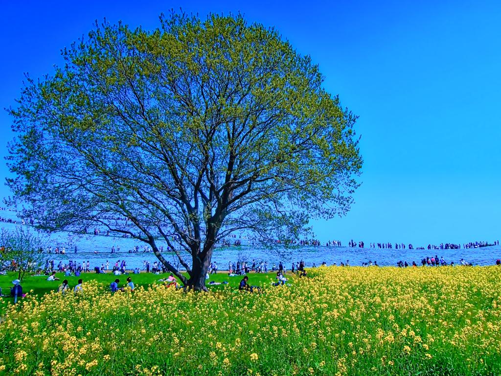 ネモフィラ畑の小さな木