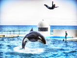 飛翔 - JUMPING Killer whale