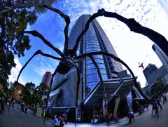 Blue Cloud 舞台の蜘蛛