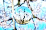 水晶の桜花