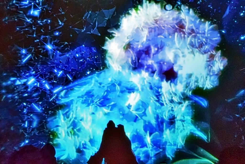 ハイドランジアの青い宇宙