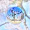 桜花水晶 - SORA gyoku NO sakura