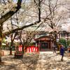 靖国神社のさくら