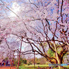 六義園 枝垂れ桜 超広角