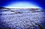 蒼穹の砂丘