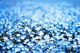 Baby Blue Eyes -青い瞳の涙 -