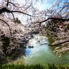 4月 -  芽吹く桜花の季節  -