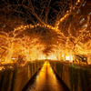 目黒川 黄金の洞窟