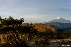 富士に逢いたくて 275