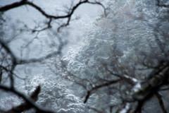 5月の雪景色