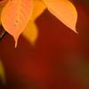秋を愛でて